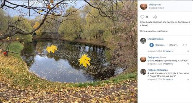 Фото дня: опавшие клены Лефортовского парка