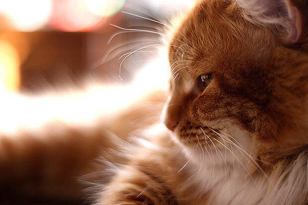 Как договориться с кошкой: Практическое руководство для опытных и новичков