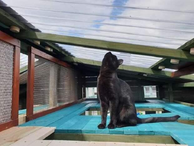 Парень построил гигантский комплекс для своей кошки. Масштабы поражают!