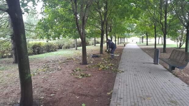Собранную в парке на Ходынке листву вернули обратно