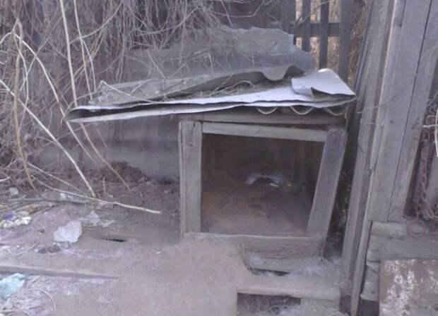 Благовещенцы бросили своего пса на цепи умирать от голода