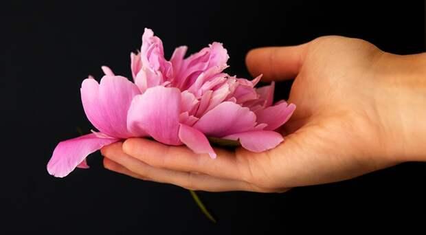 Как ухаживать за пионами во время и после цветения