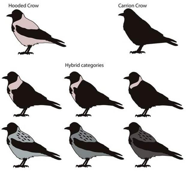 genomic_landscape_in_crows_3_600.jpg