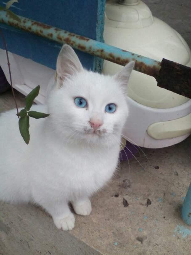 Красавец альбинос найденыш