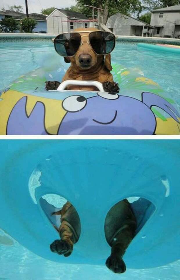 9. Эта псинка вся как с картинки бассейн, животные