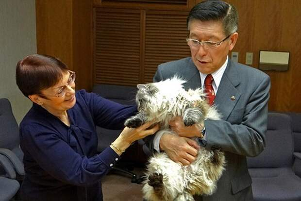 Губернатору японской префектуры Акита вручен сибирский кот в подарок от президента РФ