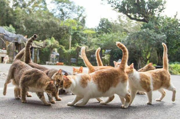 Кошки выглядят так, будто кланяются друг другу. Хотя, они же японцы.