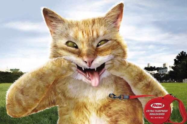 Совершенно отвязные кошки в рекламе собачьих поводков