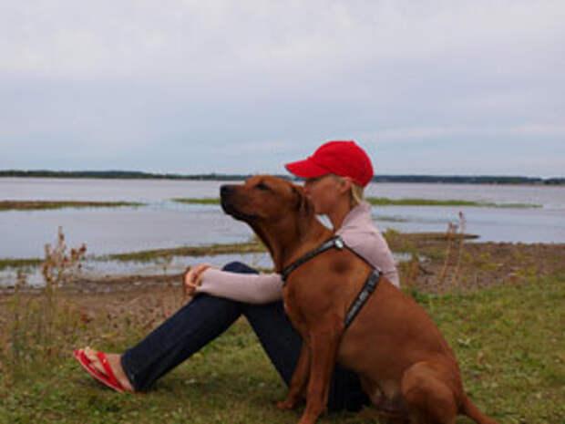 Как научить ребёнка правильно общаться с собакой