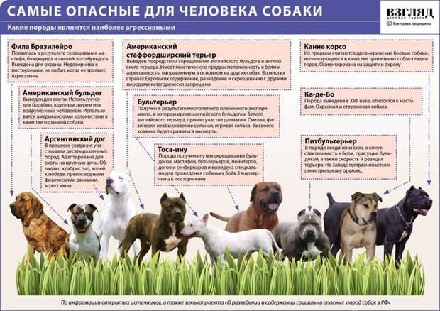 В Тверской области условия и принципы содержания домашних животных определит региональный закон.