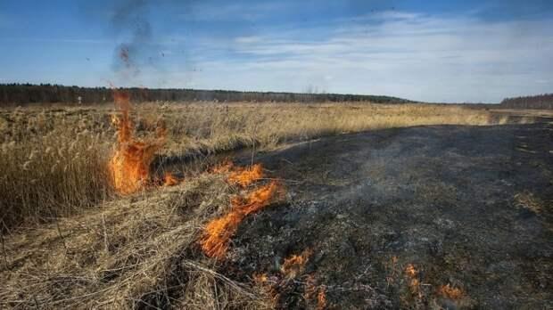 Идею контролируемого пала сухой травы раскритиковали в Рослесхозе и Greenpeace