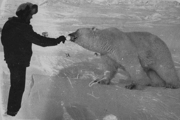 Как пограничники кормили медведей сгущёнкой, 1980-е
