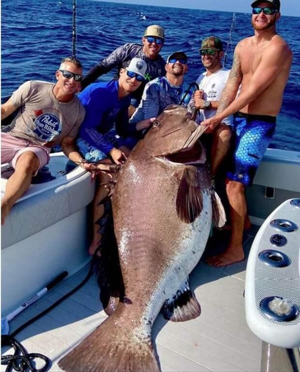 Американцу попался шикарный улов - морской окунь весом 158 кг