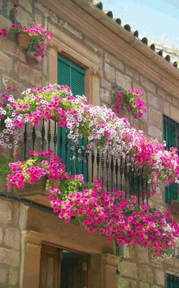 Идеи композиций из цветов для балконных ящиков