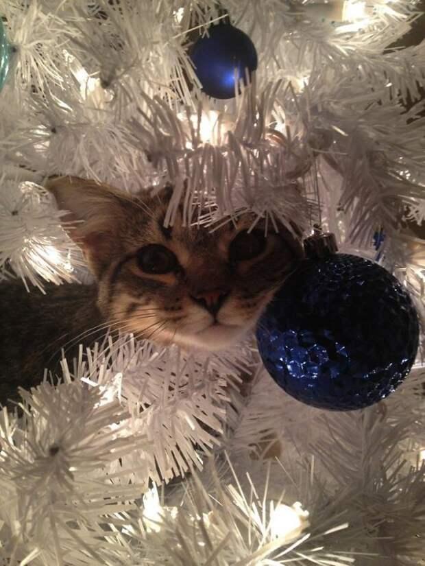 10. Еще одно елочное украшение  елка, кошка, подборка