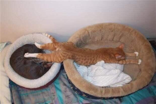 15 котов, которым плевать на вашу логику