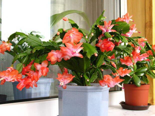 Как обеспечить уютную зимовку домашним растениям