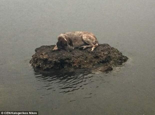 Спасение собаки, которая спряталась от пожаров на маленьком камне в море