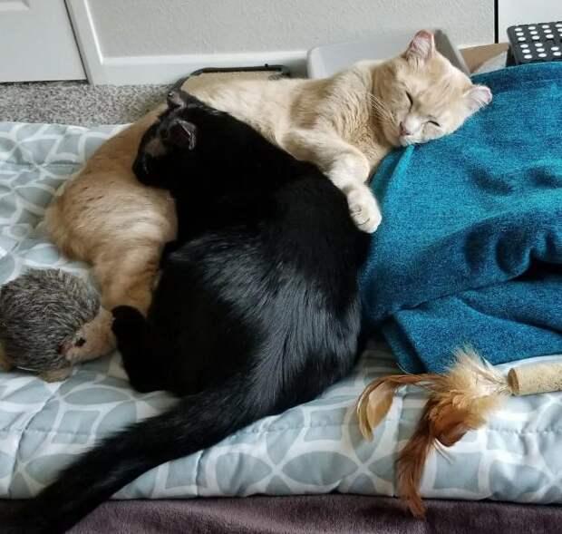 два кота спят