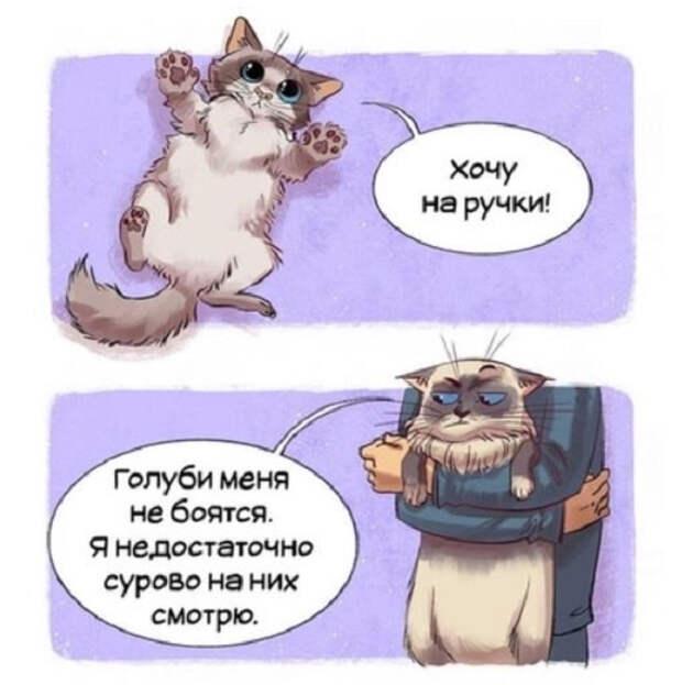 Гайд по котам