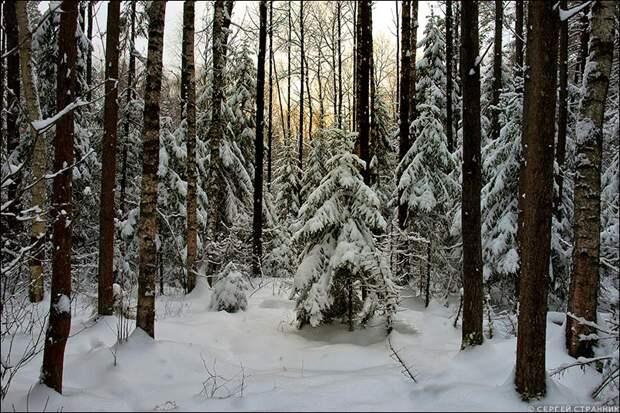 Воря и Бычеровский Лес