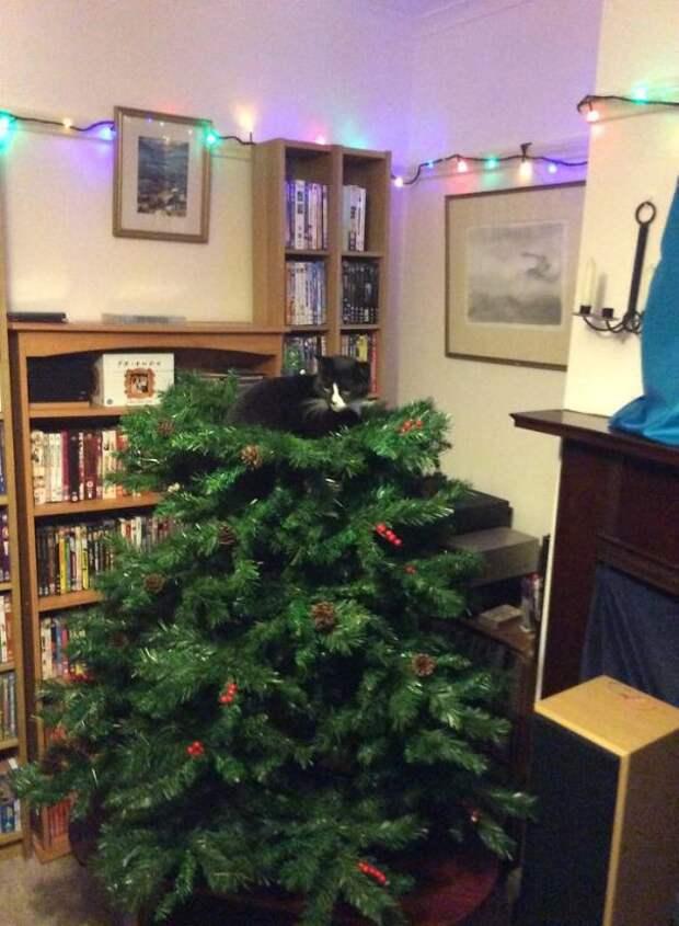 6. Это только начало елка, кошка, подборка
