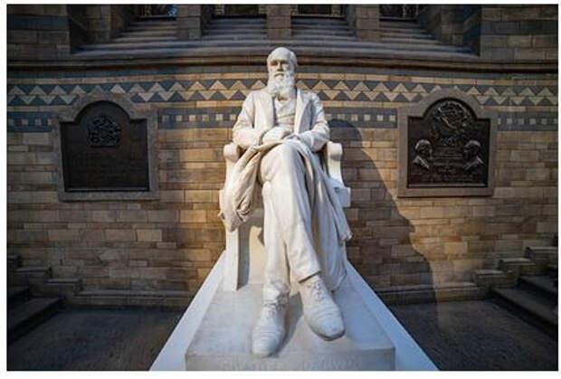 В теории эволюции Дарвина обнаружили ошибку