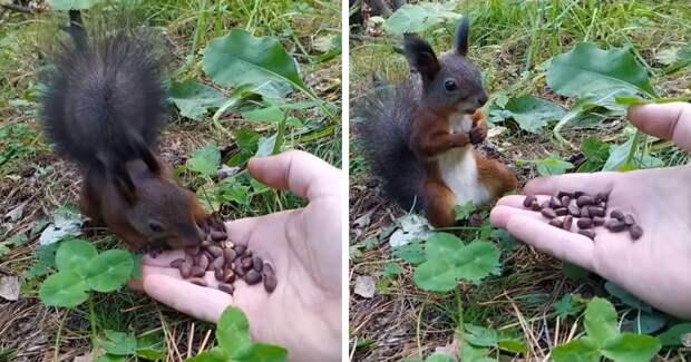 В сети появилось видео с белкой, которая ела орешки, а потом вдруг зависла. И это состояние знакомо каждому