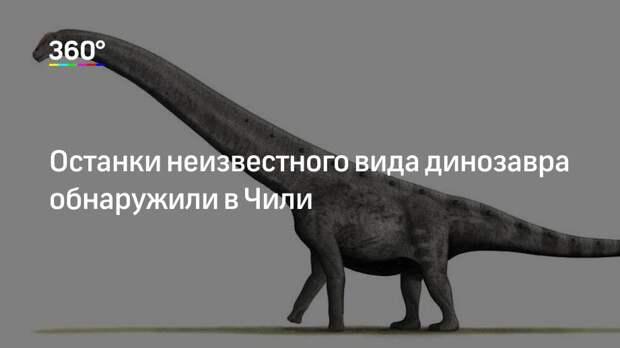 Останки неизвестного вида динозавра обнаружили в Чили