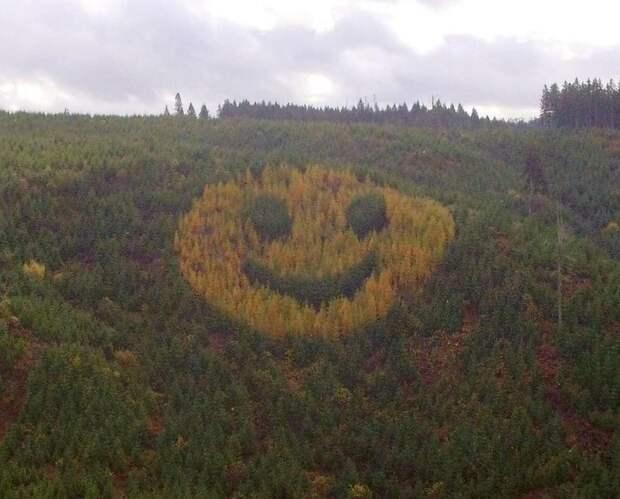 Деревья посаженные в виде смайлика | Пикабу