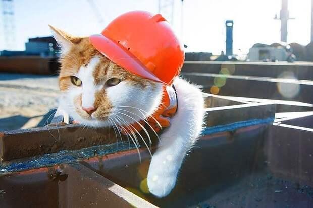 Закрывает рейтинг Медиалогии рыжий кот, живущий на стройке Крымского моста. Фото: Инфоцентр Крымский мост