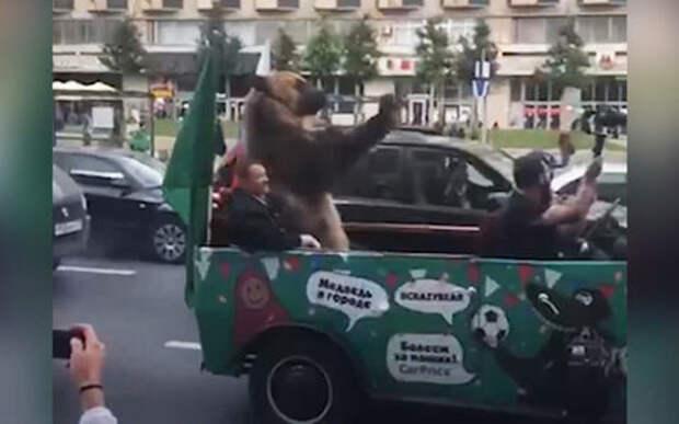 Медведь с вувузелой. А что вы хотели — наши победили!