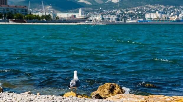 На Кубани в праздничные выходные ожидается большой наплыв туристов