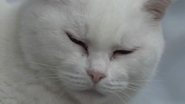 «Через неделю, как меня не станет, придет к двери, Маруся, белая кошка. Впусти его, он счастье принесет», — наказал Иван