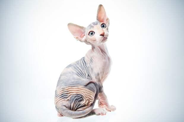 Недавние исследования: кошки равнодушны к своим хозяевам