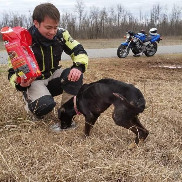 Как два байкера спасли собаку из заключения...невероятная история!