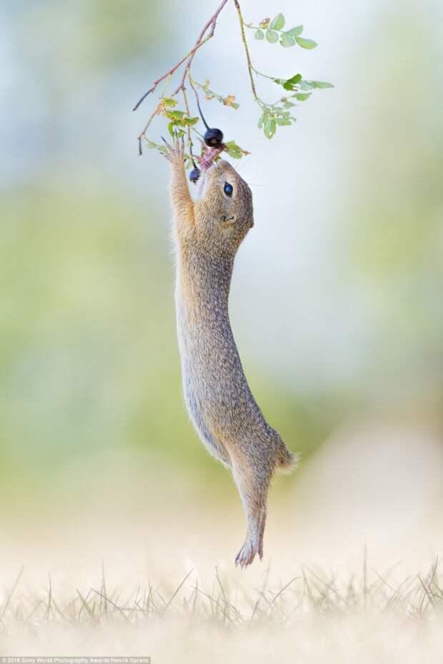Лучшие фотографии матушки-природы