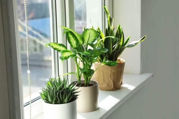 Как расположить цветы в квартире