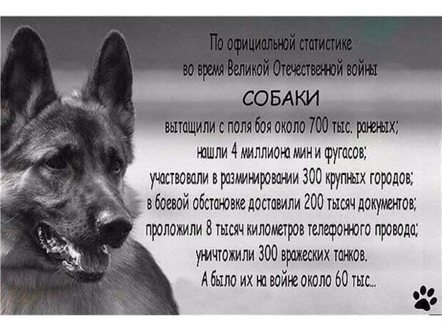 Джульбарс – первый и единственный пес, получивший настоящую боевую награду во время войны