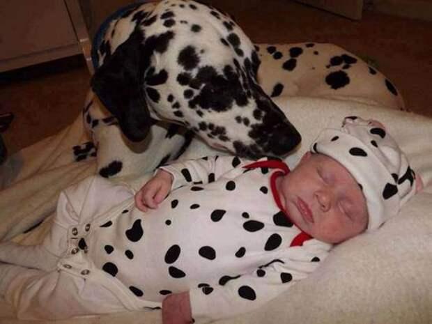 дети должны расти с домашними животными (8)