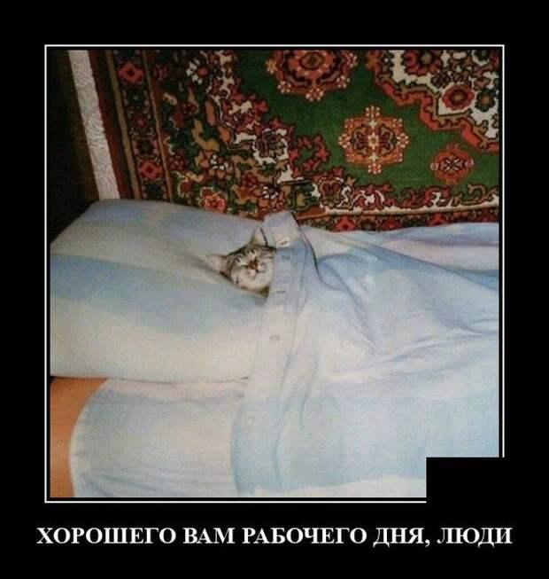 Демотиватор про спящего кота