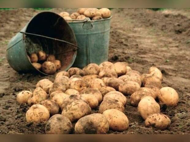 В Забайкалье готовятся к «картофельным войнам»