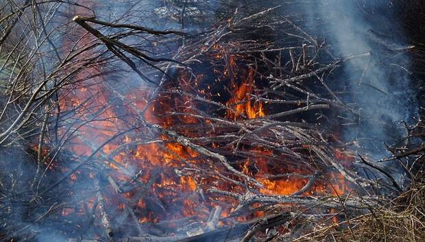 Жителей Подмосковья предупредили о высокой пожароопасности в пятницу