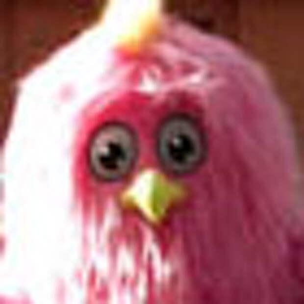 Птица-кукарача размножается танцами