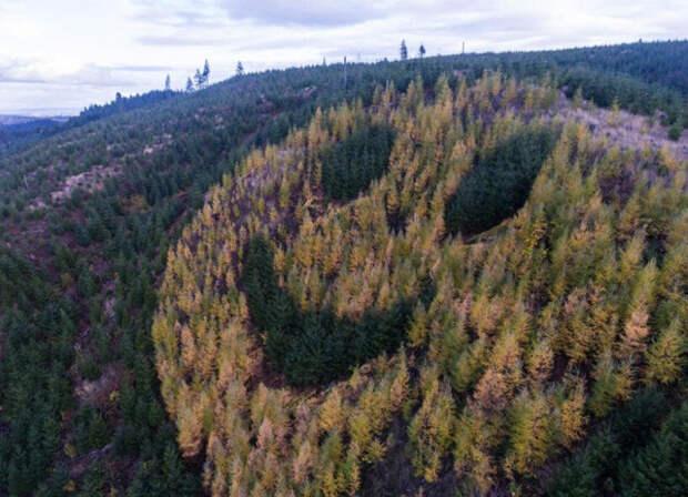 Гигантский смайлик из деревьев