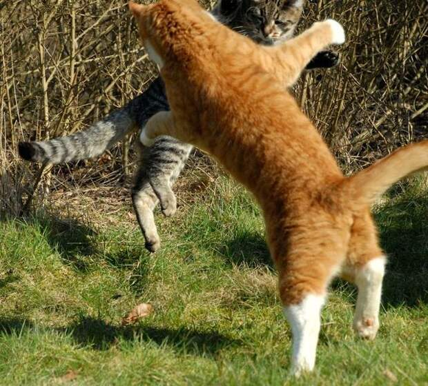 cat_flying_fight_10