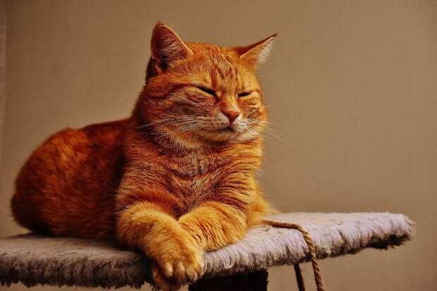 Такой рыжий, такой злой. Но другого кота не надо