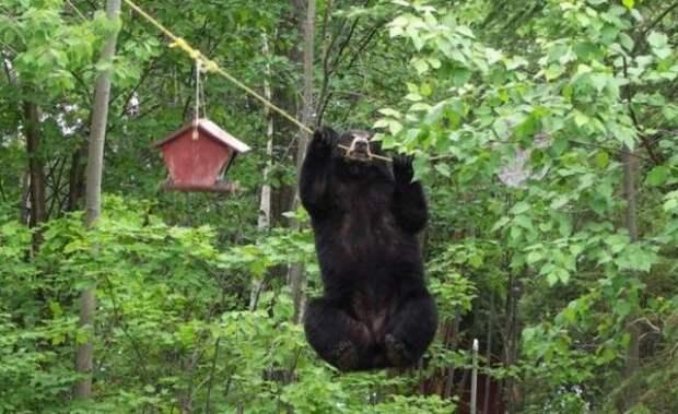 Медведь решил покушать (4 фото)