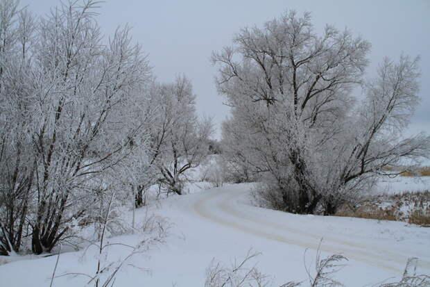 Но сейчас морозцы. Так что можно деревня, животные, история, коты