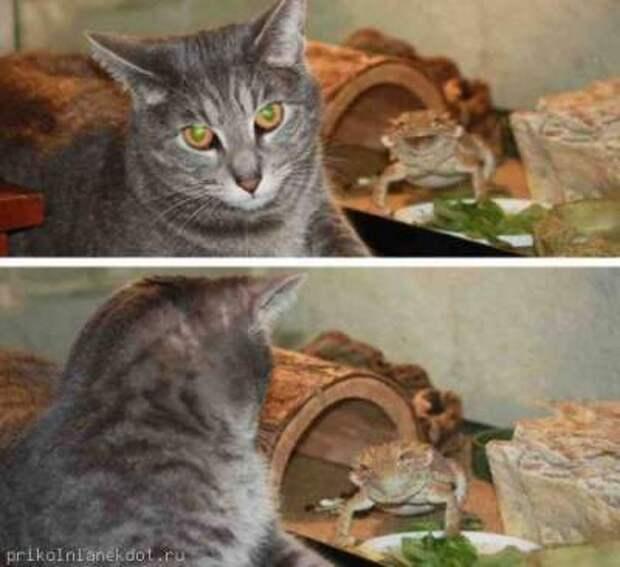 Потешные животные, умеющие портить фотки